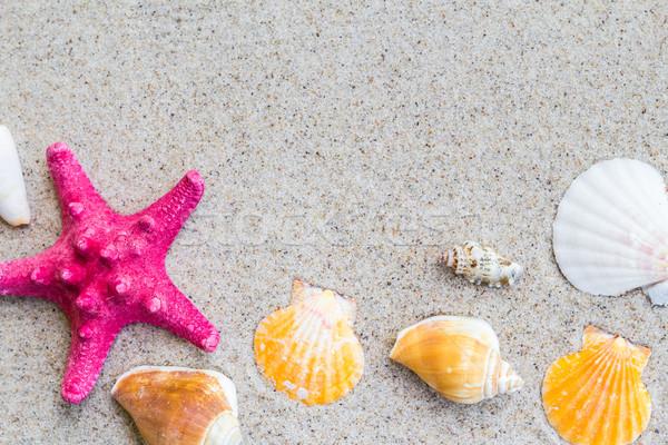 Stock photo: colorfull Sea shells sand board