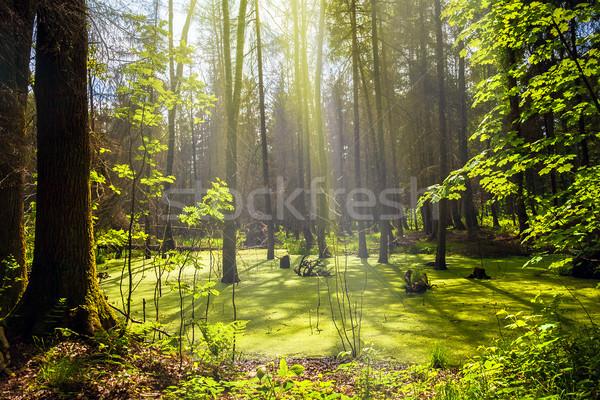 Erdő tájkép panoráma kilátás mocsár fák Stock fotó © fotoaloja