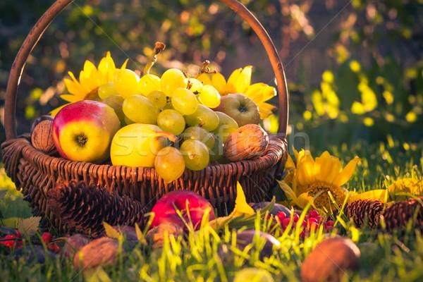 Automne verger panier fruits frais lumière du soleil soleil Photo stock © fotoaloja