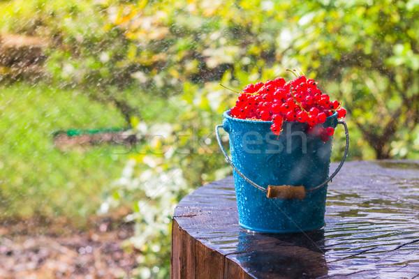 red currant fruit bucket summer rain drops water wooden Stock photo © fotoaloja