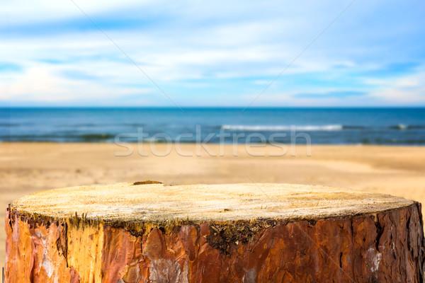 Pine stump background sea beach Stock photo © fotoaloja