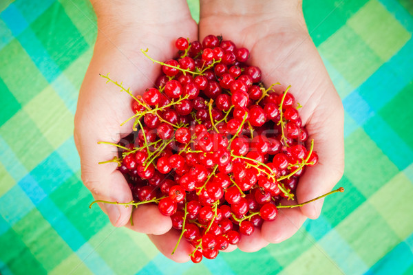 Male hands holding red currant fruit fresh air Stock photo © fotoaloja