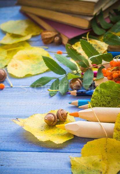 Autumn back school acorns and school Stock photo © fotoaloja