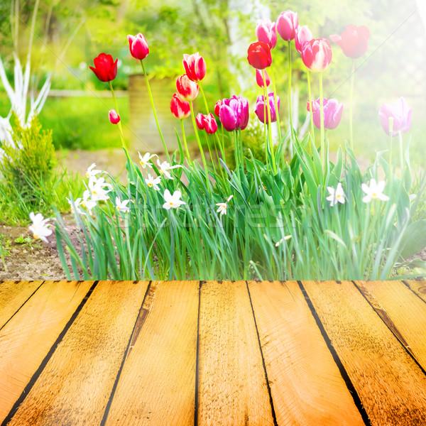 Primavera tulipani legno pannello natura giardino Foto d'archivio © fotoaloja
