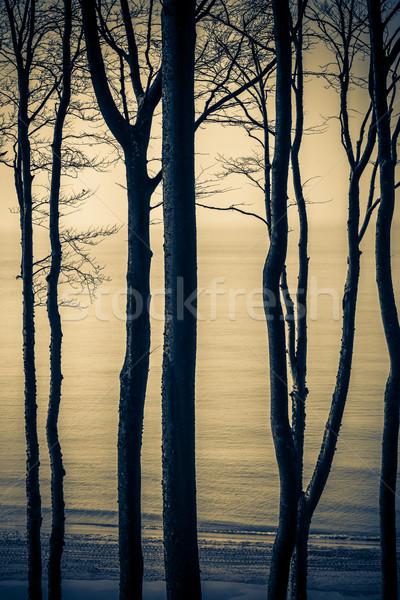 Kilátás part Balti-tenger tavasz erdő tenger Stock fotó © fotoaloja