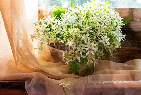 Still life bunch small white florets window Stock photo © fotoaloja