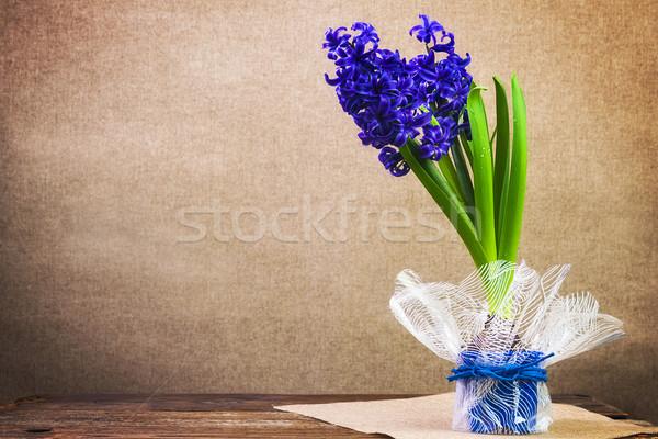 Art vintage background hyacinth flower board wooden spring Stock photo © fotoaloja