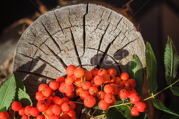 осень плодов старые природы оранжевый таблице Сток-фото © fotoaloja