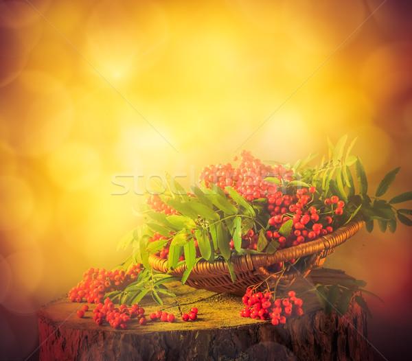 Autumn fruit basket red rowan sun Stock photo © fotoaloja