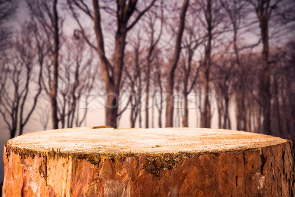 Pine stump background autumn forest Stock photo © fotoaloja