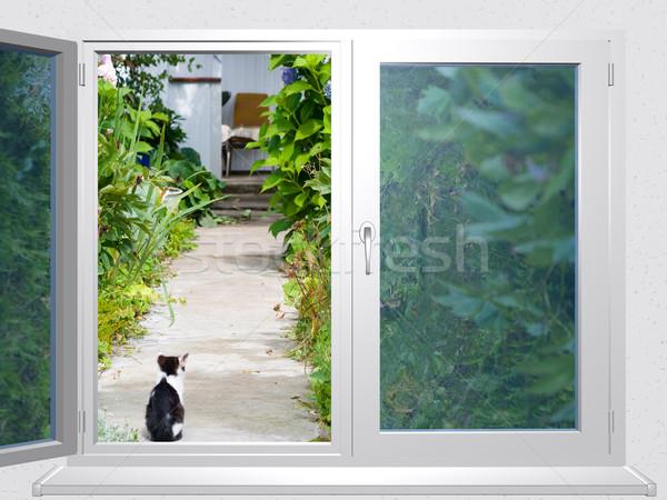 view from the window lane at cat Stock photo © fotoaloja