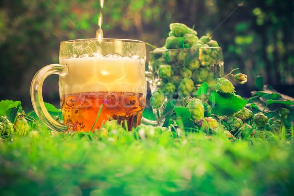 Quartilho cerveja cone beber vida ouro Foto stock © fotoaloja