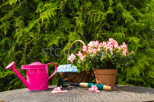 Stock photo: Different tools plants spring garden