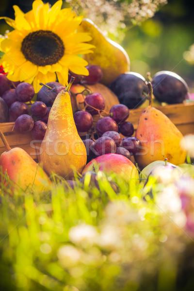 Autumn orchard fruit crops grass sunset Stock photo © fotoaloja