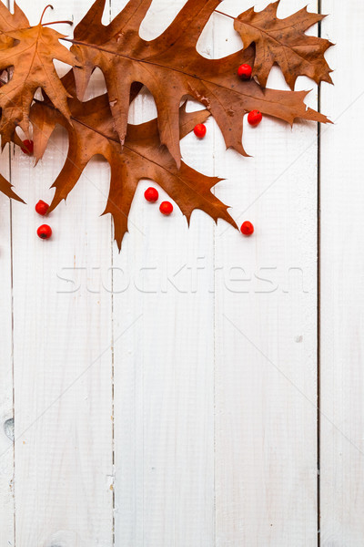 Brown leaves rowan white boards composition autumn Stock photo © fotoaloja