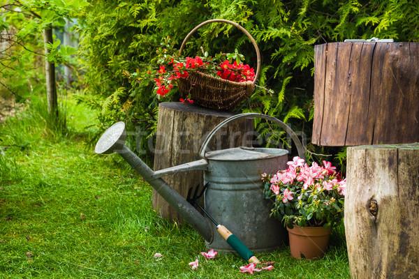 различный инструменты растений весны саду трава Сток-фото © fotoaloja
