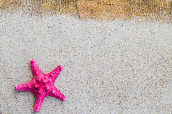 Sea shell sand board Stock photo © fotoaloja