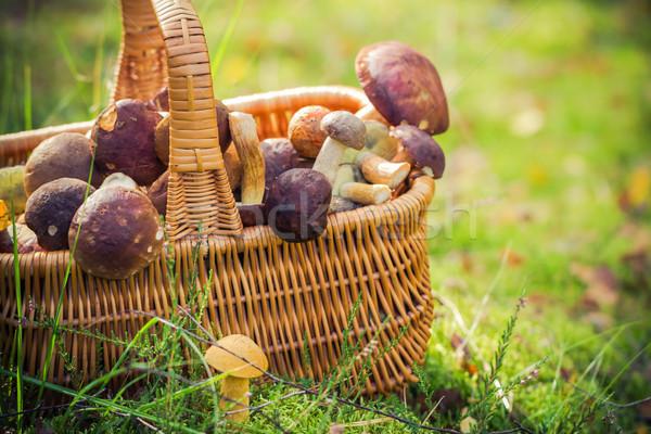 Kosár tele ehető gombák erdő fény Stock fotó © fotoaloja