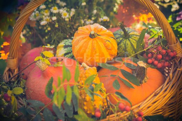Basket autumn fruit colorful pumpkins asters Stock photo © fotoaloja