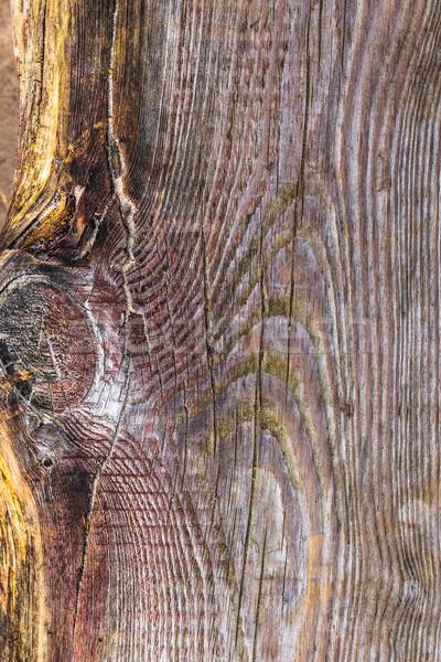 áspero visível textura árvore Foto stock © fotoaloja
