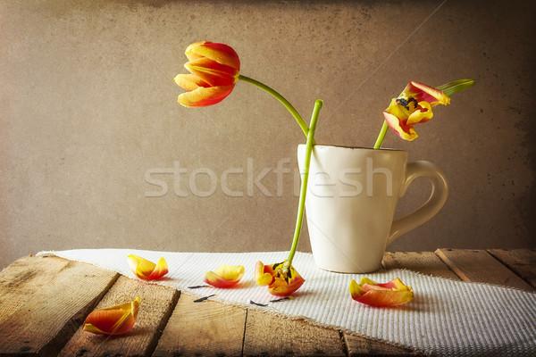 Transience Still life tulips cup petals Stock photo © fotoaloja