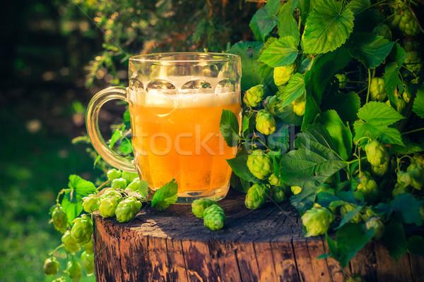Quartilho dourado cerveja beber vida Foto stock © fotoaloja