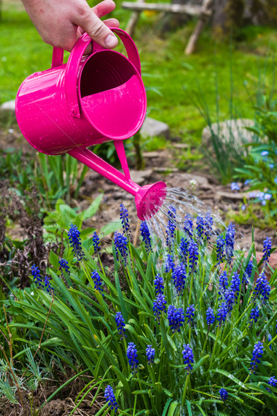 Spring works garden watering plants watering can Stock photo © fotoaloja