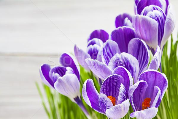Kikerics virág növény virágmintás tavasz fehér Stock fotó © fotoaloja