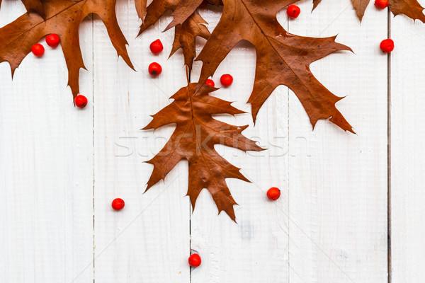Barna levelek fehér ősz terv levél Stock fotó © fotoaloja
