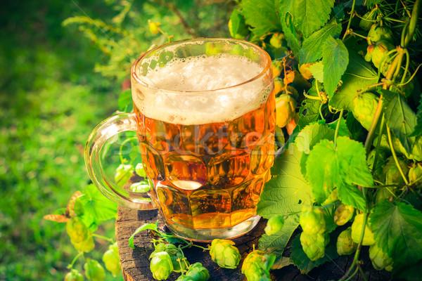 Pint golden beer wooden trunk Stock photo © fotoaloja