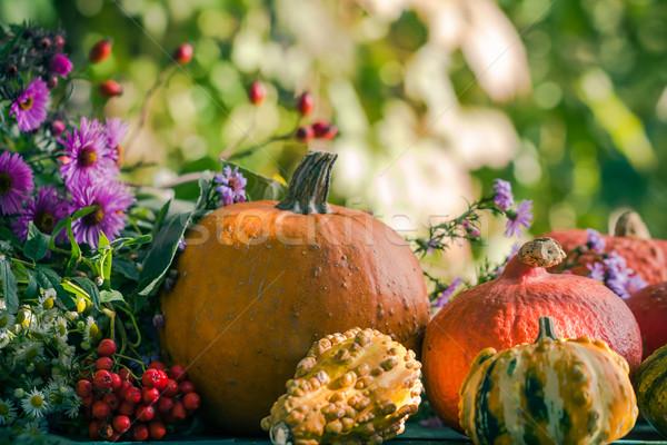 Photo stock: Automne · récolte · jardin · citrouille · fruits · coloré