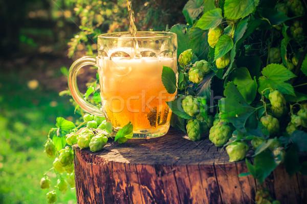 Stok fotoğraf: Bira · atlama · içmek · hayat · altın