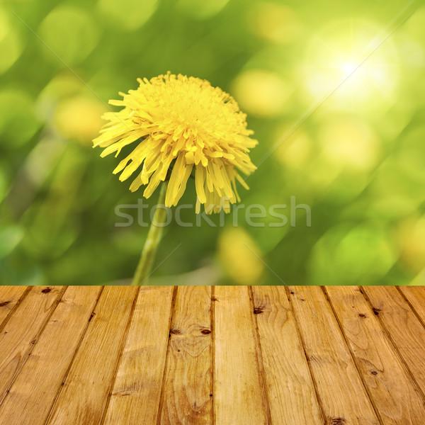 Primavera diente de león hierba madera naturaleza Foto stock © fotoaloja