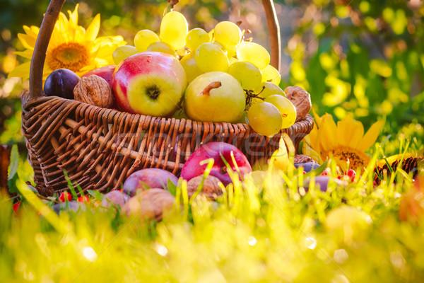 Basket completo frutti erba tramonto luce Foto d'archivio © fotoaloja
