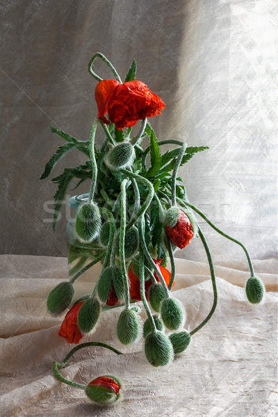 Still Life bouquet red poppies Stock photo © fotoaloja