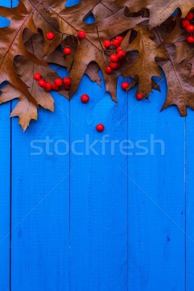 Autumn background leaves rowan fruit blue boards Stock photo © fotoaloja