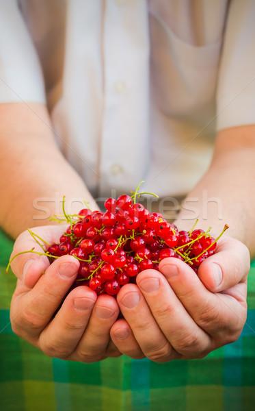 Masculino mãos vermelho groselha fruto Foto stock © fotoaloja