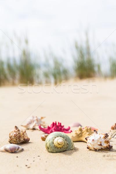 красочный морем снарядов пляж солнце Сток-фото © fotoaloja