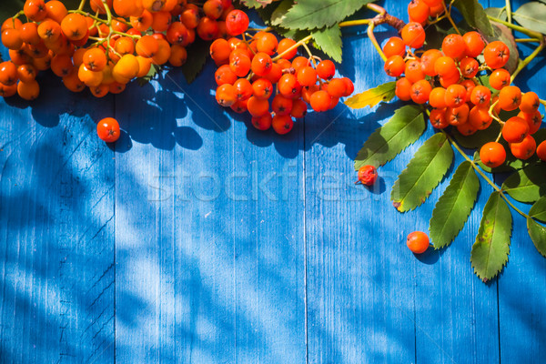 Frutti blu natura arancione Foto d'archivio © fotoaloja