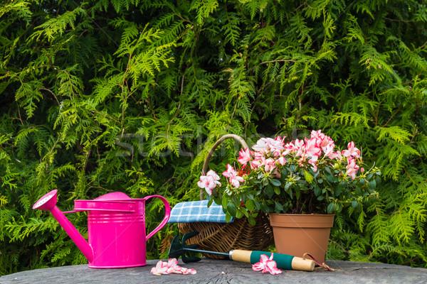 Zdjęcia stock: Inny · narzędzia · roślin · wiosną · ogród · trawy