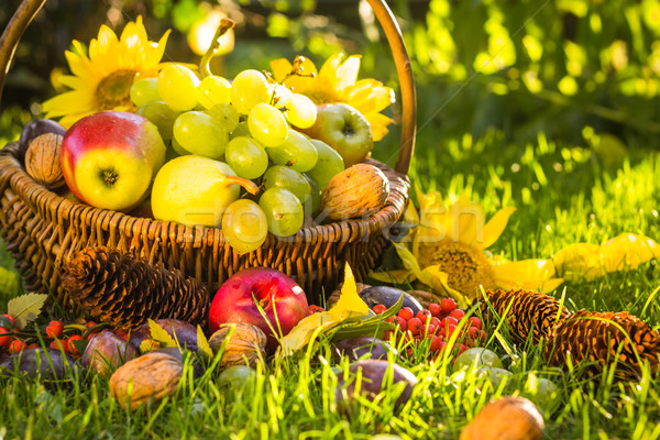 Autumn orchard basket fresh fruit sunlight Stock photo © fotoaloja