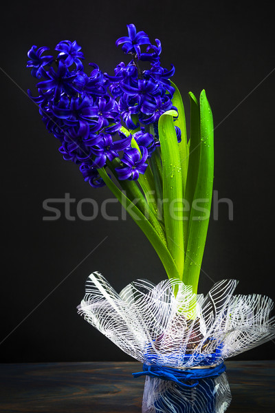 Art vintage jacinthe noir printemps feuille Photo stock © fotoaloja