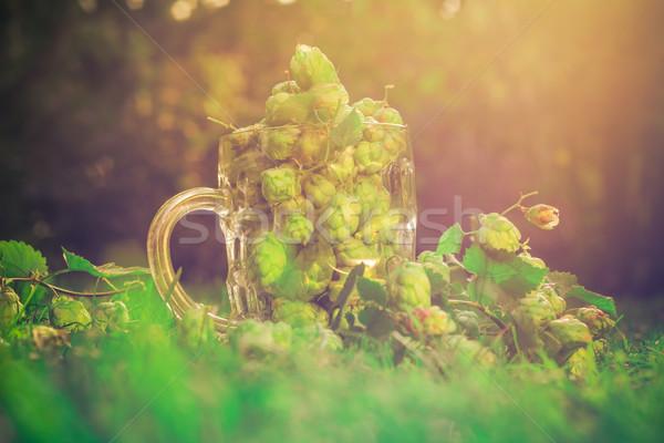 Vidro caneca completo verde salto folha Foto stock © fotoaloja