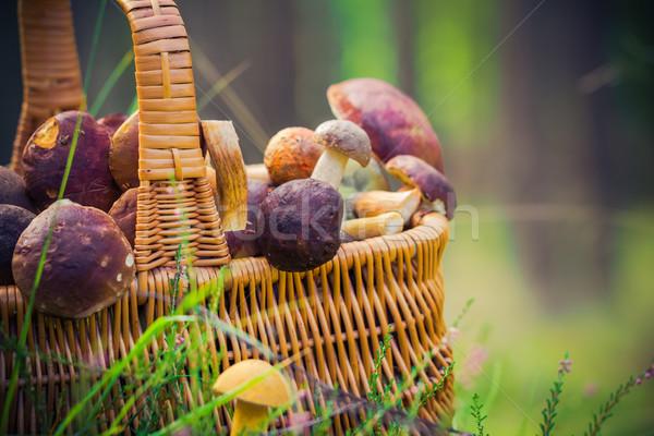 Basket full edible mushrooms forest Stock photo © fotoaloja
