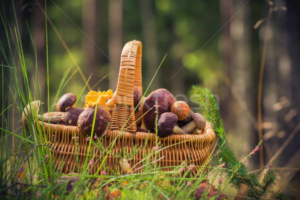 ősz kosár tele ehető gombák erdő Stock fotó © fotoaloja