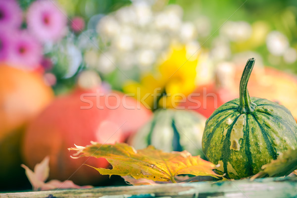 Autumn harvest garden pumpkin fruits colorful flowers plants Stock photo © fotoaloja