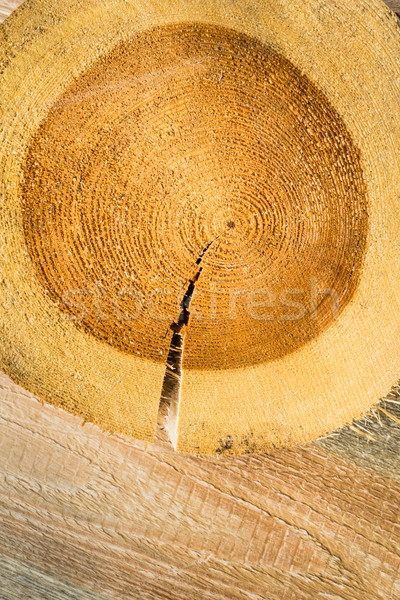 Cracked tree stump wooden countertop brown Stock photo © fotoaloja