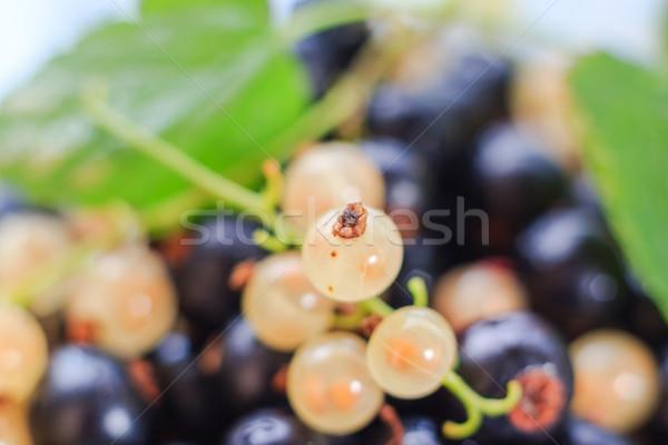 Stockfoto: Vruchten · tuin · zomer · boerderij · zwarte · markt