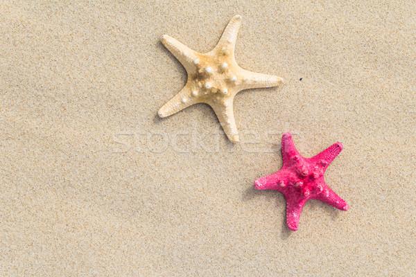 Beach background top view sea shells stars Stock photo © fotoaloja