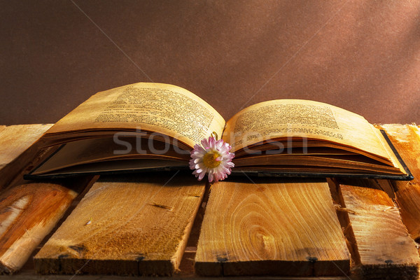 book daisy open old vintage wooden board flower grunge dirty vin Stock photo © fotoaloja